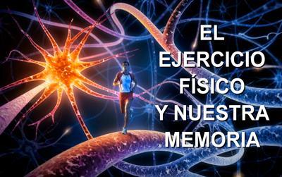 El ejercicio físico y nuestra memoria